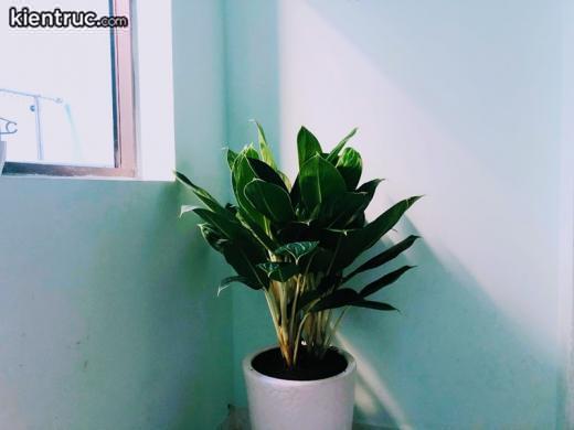phong thủy cây trong nhà